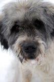 Cão do inverno Fotos de Stock