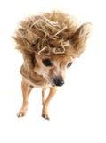 Cão do leão foto de stock royalty free