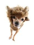 Cão do leão imagens de stock