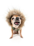 Cão do leão fotos de stock