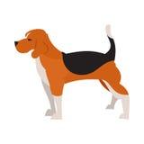 Cão do lebreiro isolado Imagens de Stock
