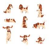 Cão do lebreiro no vário grupo das poses, ilustração animal engraçada bonito do vetor do personagem de banda desenhada em um fund ilustração stock