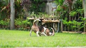 Cão do lebreiro que joga no gramado filme
