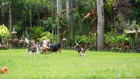 Cão do lebreiro que joga no gramado vídeos de arquivo