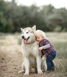Cão do Malamute dos suportes e dos abraços do rapaz pequeno para a caminhada na floresta fotografia de stock royalty free