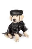 Cão do mau do cachorrinho do golden retriever fotografia de stock