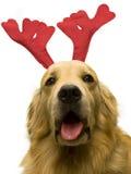 Cão do Natal Fotos de Stock