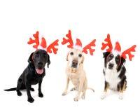 Cão do Natal imagens de stock royalty free