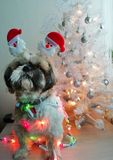 Cão do Natal com árvore de Natal imagens de stock royalty free