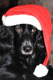 Cão do Natal com o chapéu vermelho e branco de Santa Fotos de Stock
