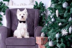 Cão do Natal como o símbolo do ano novo fotos de stock royalty free