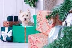 Cão do Natal como o símbolo do ano novo Fotos de Stock