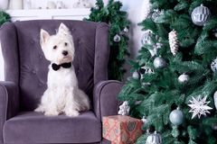 Cão do Natal como o símbolo do ano novo Imagem de Stock