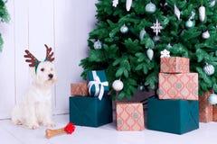 Cão do Natal como o símbolo do ano novo Imagens de Stock