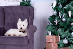 Cão do Natal como o símbolo do ano novo Imagem de Stock Royalty Free