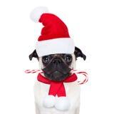 Cão do Natal como Papai Noel Imagens de Stock Royalty Free