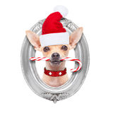 Cão do Natal como Papai Noel Imagem de Stock