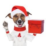 Cão do Natal da surpresa com uma caixa atual Imagem de Stock