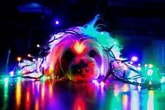 Cão do Natal feliz e luzes coloridas fotos de stock royalty free