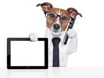 Cão do negócio fotografia de stock