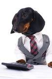 Cão do negócio imagens de stock royalty free