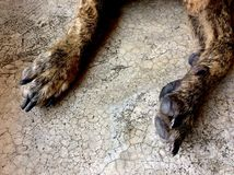 Cão do pé Imagens de Stock Royalty Free