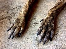 Cão do pé Imagem de Stock Royalty Free