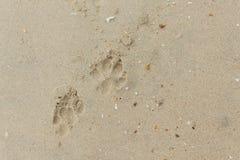 Cão do pé na areia ilustração do vetor