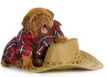 Cão do país Fotos de Stock