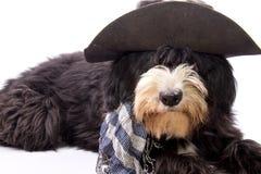 Cão do país Imagens de Stock
