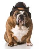 Cão do país Foto de Stock