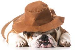 Cão do país Imagem de Stock Royalty Free