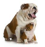 Cão do pai e do filho Fotografia de Stock
