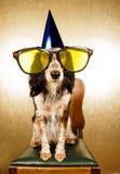 Cão do partido Fotografia de Stock
