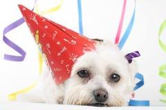 Cão do partido Imagens de Stock