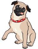 Cão do Pug Foto de Stock Royalty Free