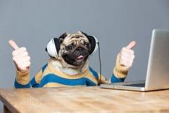 Cão do Pug com mãos do homem nos fones de ouvido que mostram os polegares acima Imagem de Stock Royalty Free