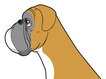 Cão do pugilista Foto de Stock