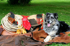 Cão do rancho Fotografia de Stock