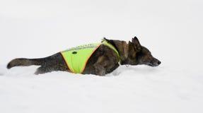 Cão do salvamento imagem de stock royalty free