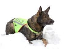 Cão do salvamento Imagem de Stock