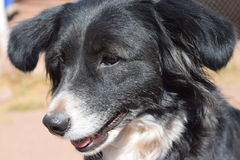 Cão do salvamento em Cuzco, Peru fotos de stock royalty free