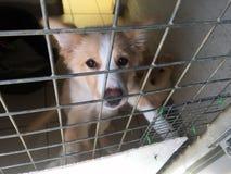 Cão do salvamento em uma gaiola fotografia de stock