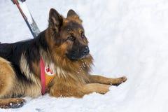 Cão do salvamento no serviço de salvamento da montanha Imagens de Stock Royalty Free