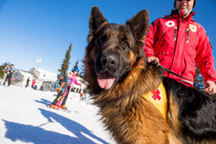 Cão do salvamento no serviço de salvamento da montanha Fotografia de Stock Royalty Free