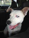 Cão do salvamento que esconde do banho Imagem de Stock Royalty Free