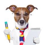 Cão do secretário Imagens de Stock