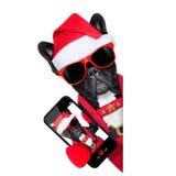 Cão do selfie de Santa Fotografia de Stock