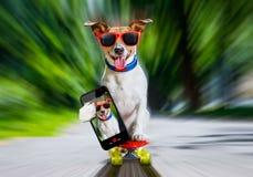 Cão do skater no skate fotografia de stock