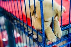 Cão do sono Foto de Stock